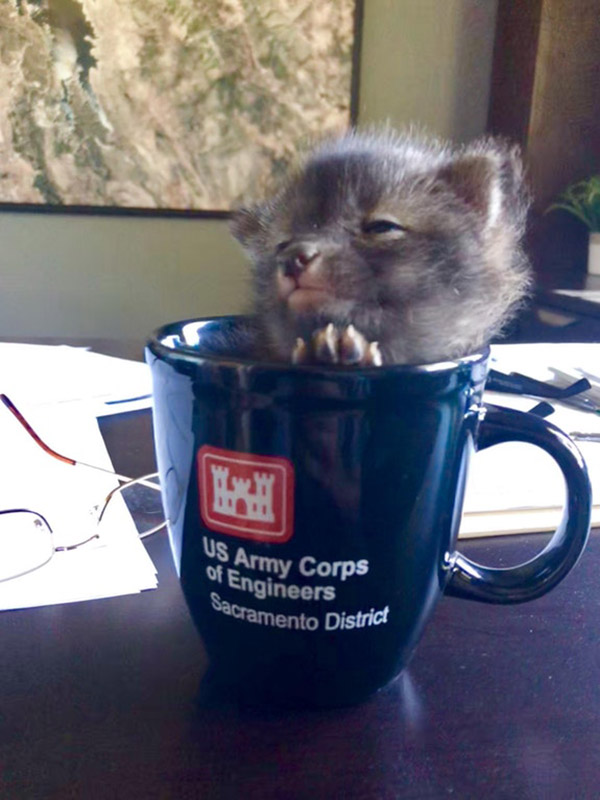 baby coyote in a cup