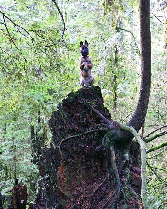 dog becomes the squirrel