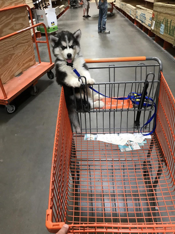 home depot shopping puppy
