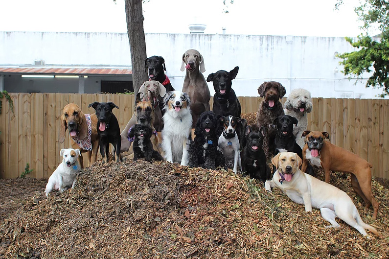 doggie daycare selfie and squad photos