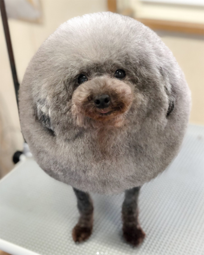 dog looks like fluffy cloud