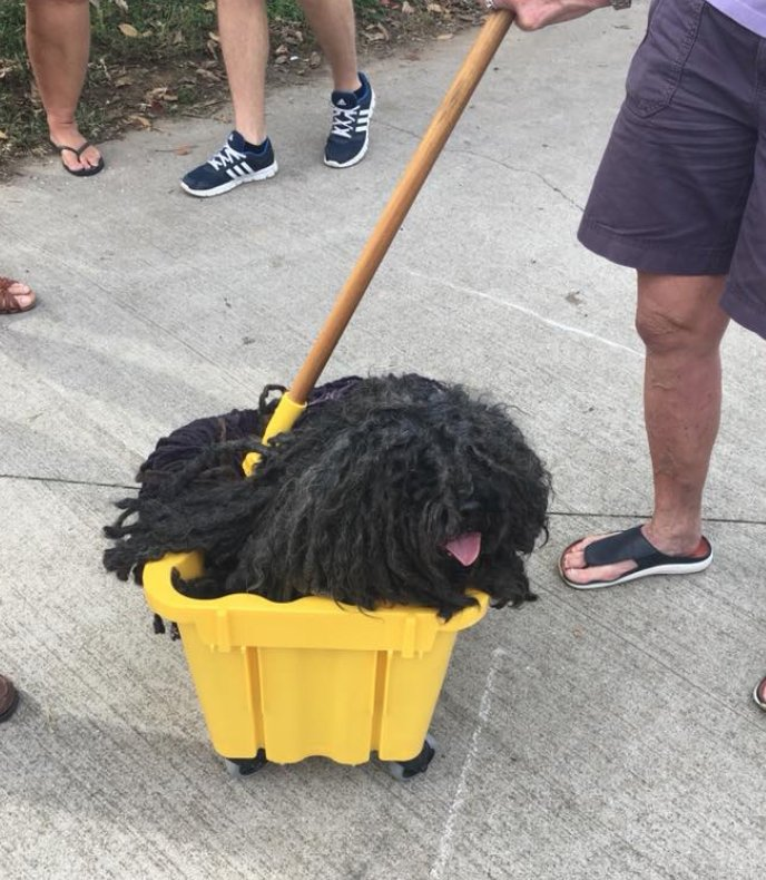 dog mop bucket costume