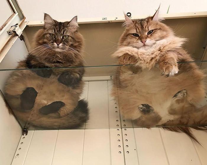 mobster kitties