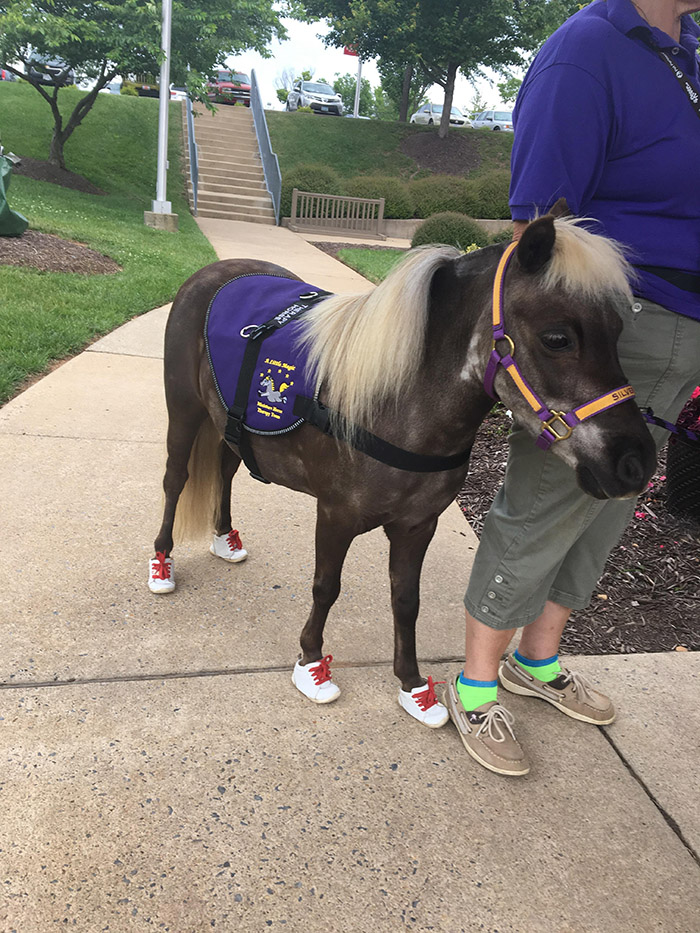 therapy pony in tiny shoes