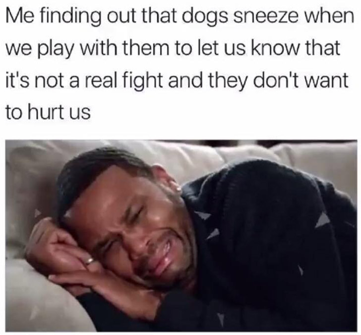 why dogs sneeze when playing