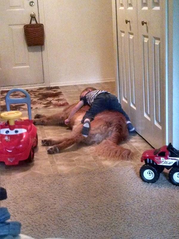 kid falls asleep on dog