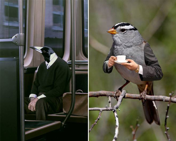 birds with human arms