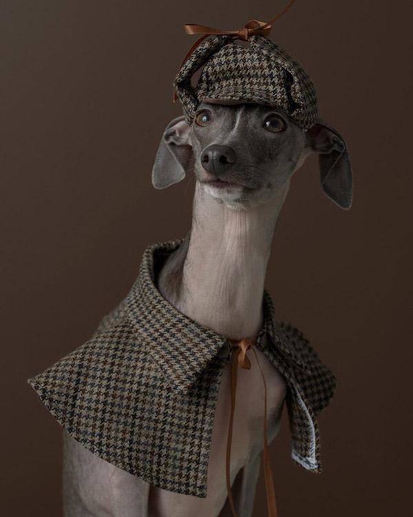 pablo the dog