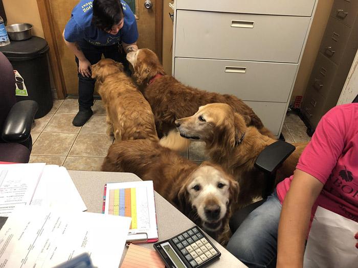 golden girls dogs