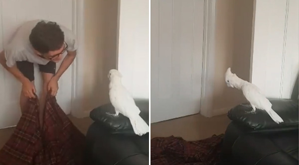 A Man And His Dog >> Man Performs Viral Disappearing Act On His Cockatoo