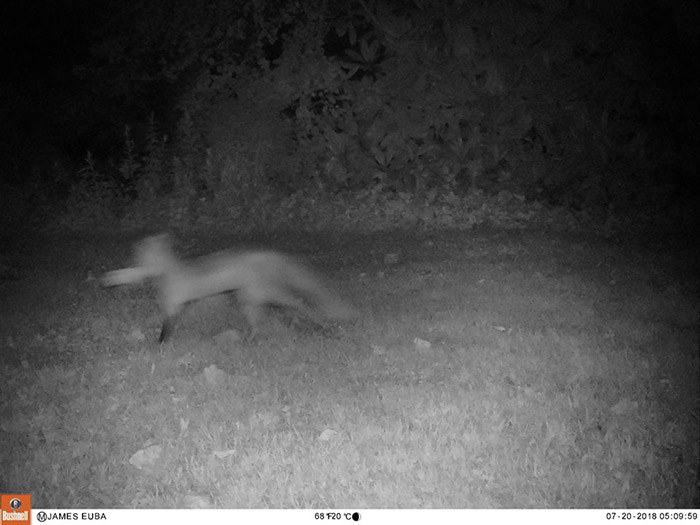 foxes bring man newspapers