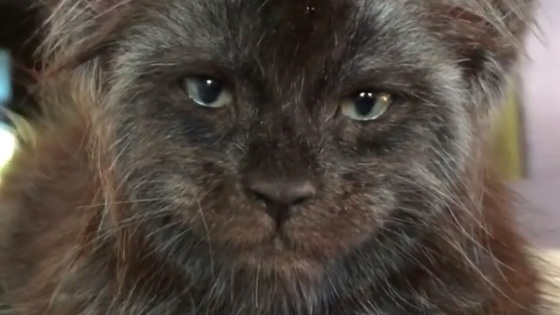 This Maine Coon Kitten Has A Very Human-Like Face And It's Freaking