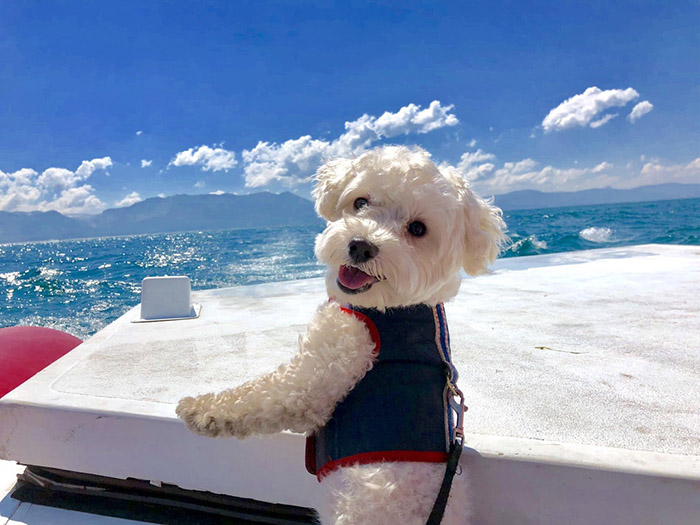 dog smiling for photo on vacation