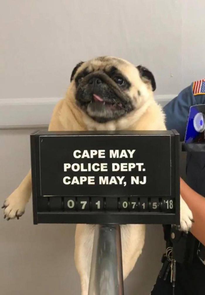 police dept posts mugshot of dog