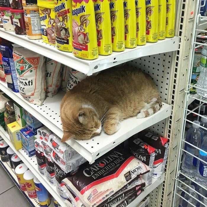 cat loaf in store
