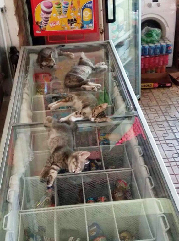kittens on ice cream cooler