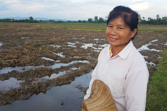 rice farmer thailand response to losing crops cave rescue
