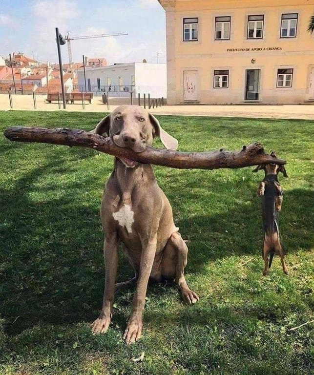 big dog little dog with stick