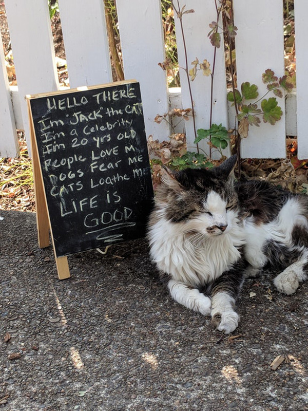 cat has his own sign