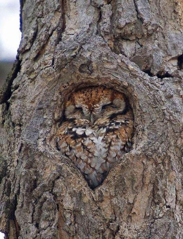 owl in tree perfect fit