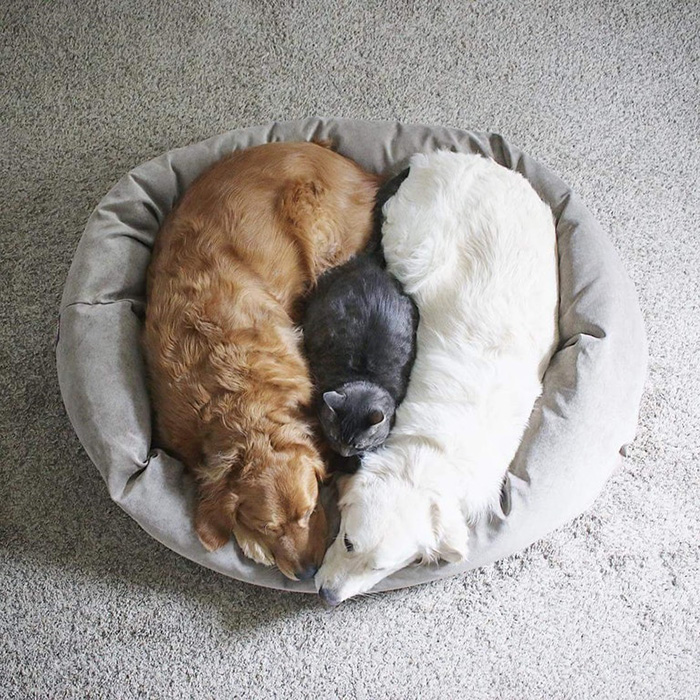 perfect love cat dogs