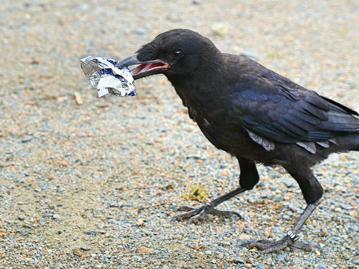 birds clean up trash theme park