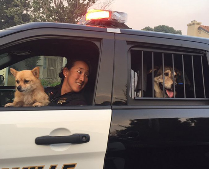 police officers rescue animals SPCA wildfire