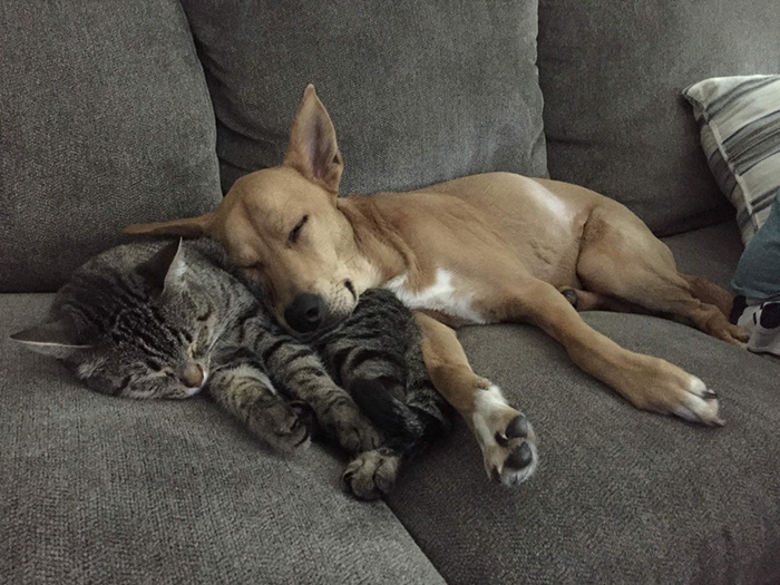 dog sleeping with cat
