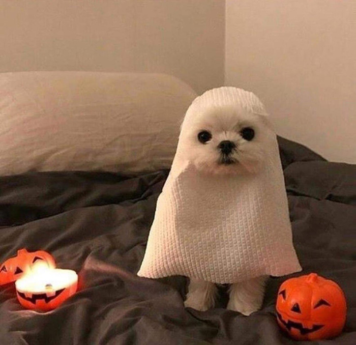 dog looks like ghost