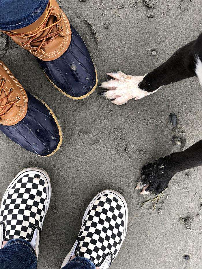family adopts puppy takes family photo of feet