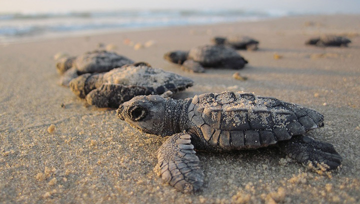 mexico stops hotel near sea turtle nesting beach