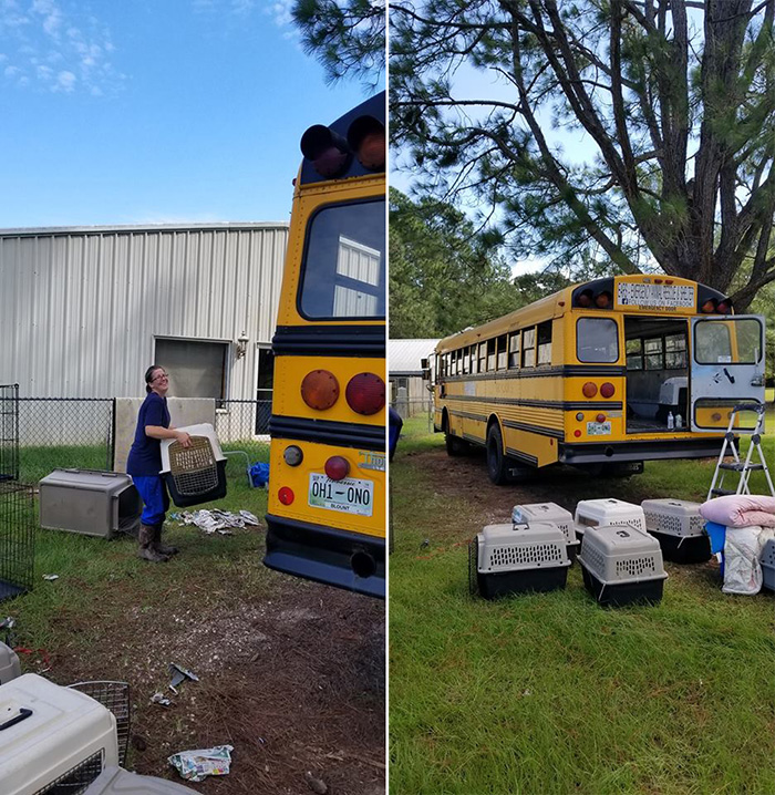 man drives school bus to save animals hurricane florence