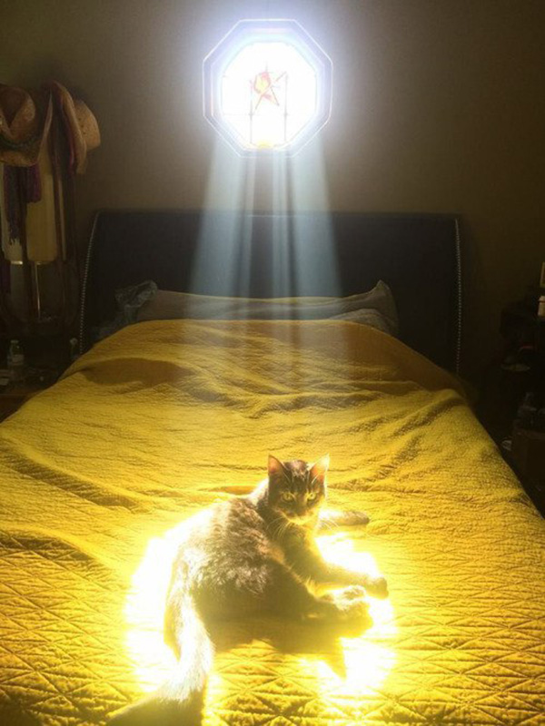 the chosen cat