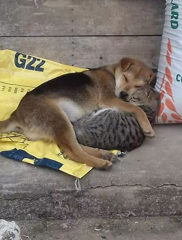 homeless dog and cat snuggling