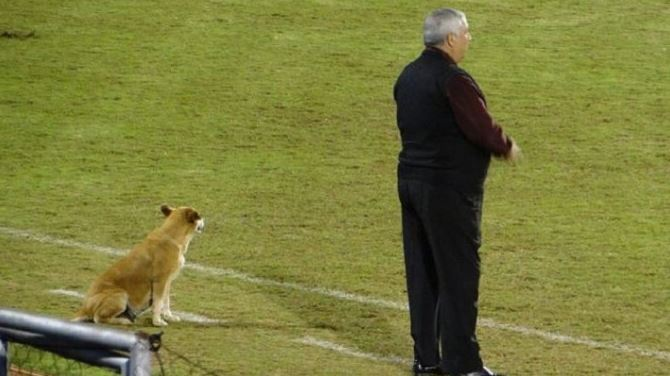 stray dog is assistant coach