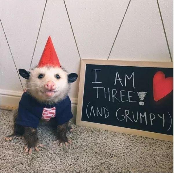 grumpy and adorable