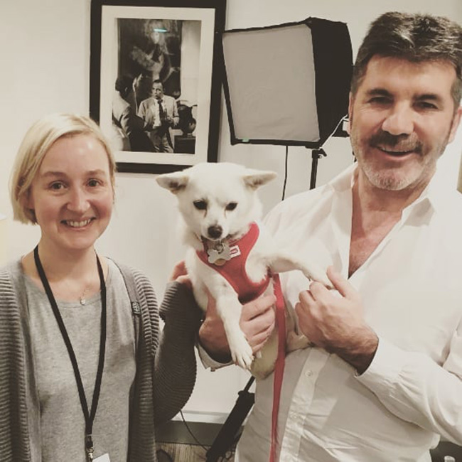 simon cowell rescues hundreds of dogs from meat market