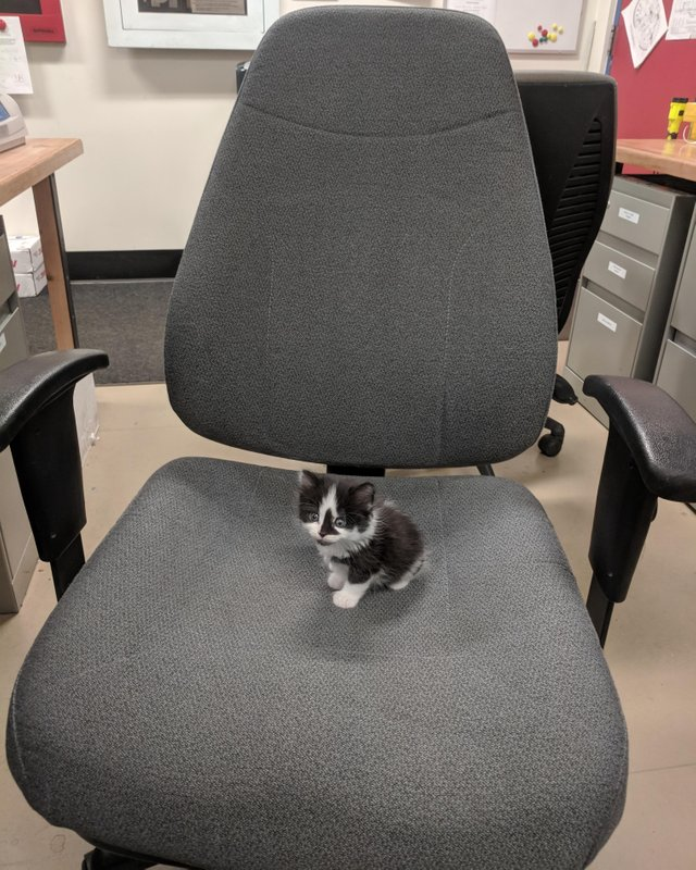 kittens first day at the office