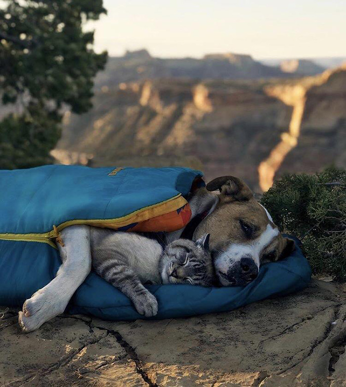 dog cat napping sleeping bag