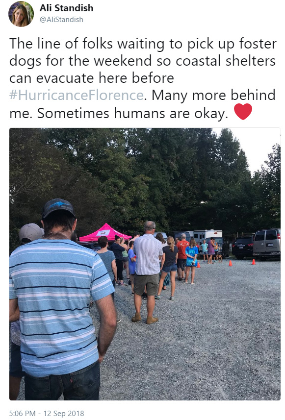 people foster shelter animals hurricane