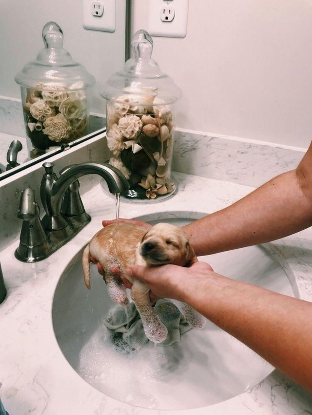 puppy gets a bath