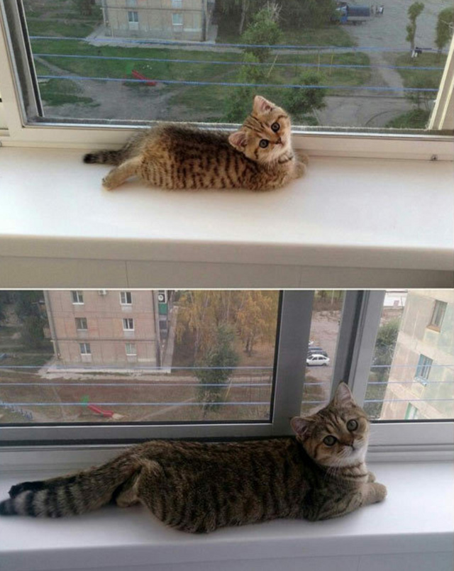 some things never change cat kitten