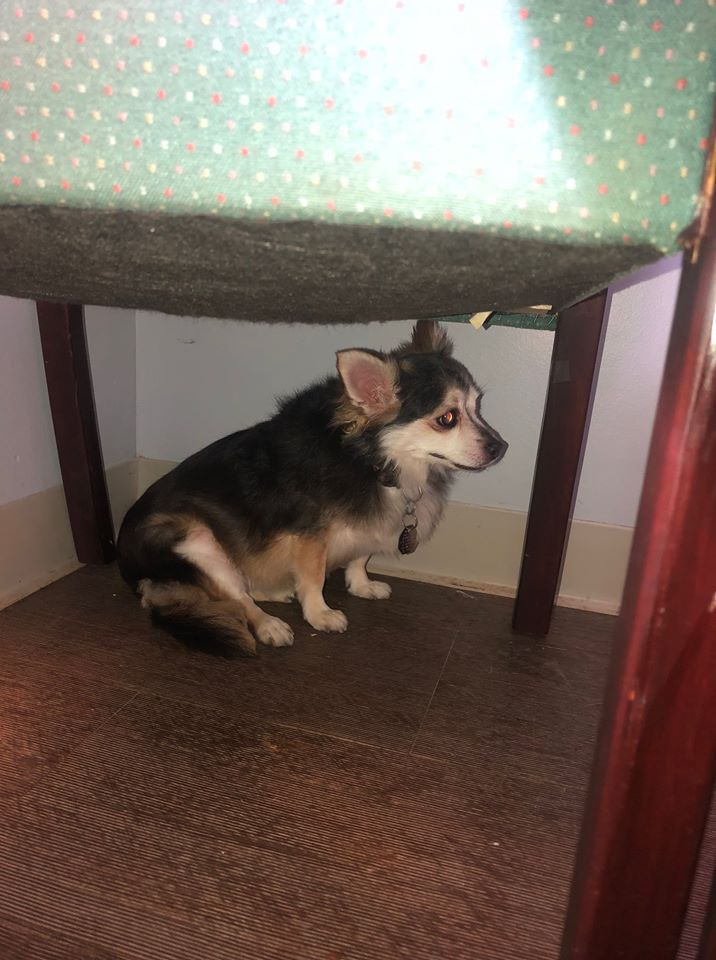 woman final request find dog home shell