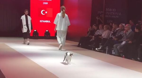 b4f75d8b99 Cat Crashes Fashion Show And Struts Down The Runway