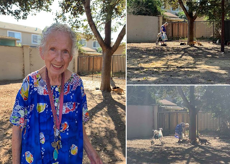 old woman feeds cats in park 10 years