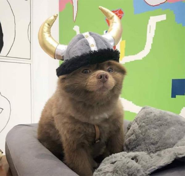 viking hat on dog