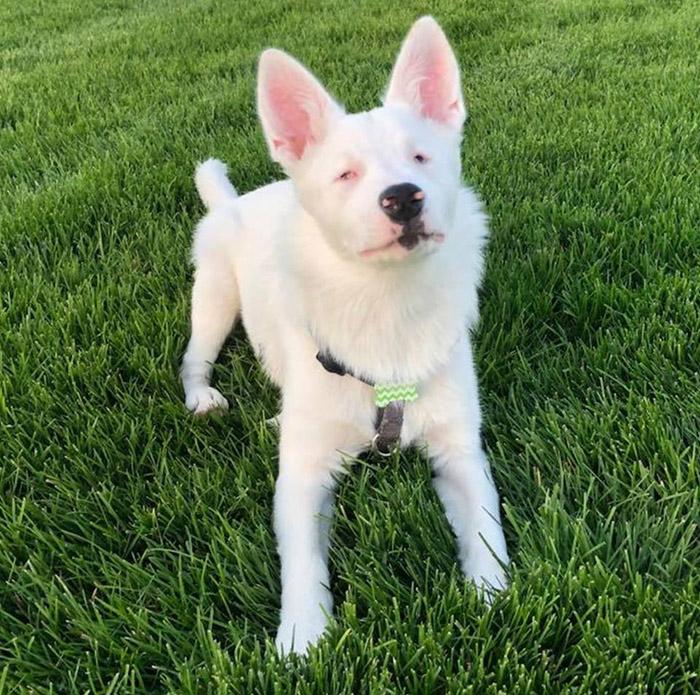 opal blind deaf dog