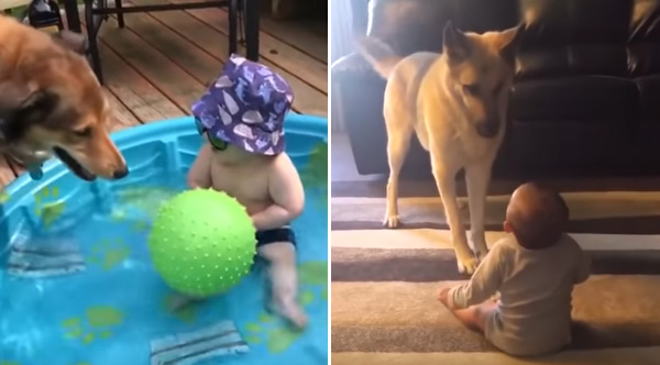 Babies Laughing Uncontrollably At Dogs