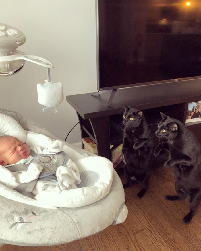 twin cats meet their baby brother