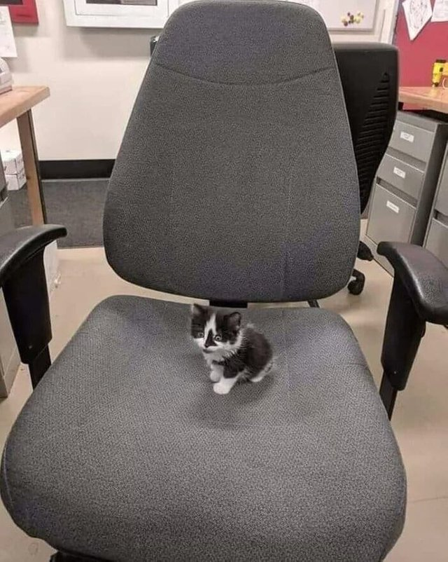 kitten on a chair